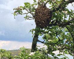 Aire naturelle de l'Aigoual - Bassurels - La ferme