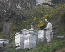 Aire naturelle de l'Aigoual  - Bassurels - Les ruches