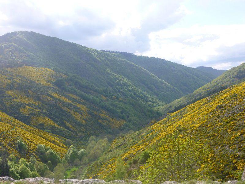 La vallée en fleur
